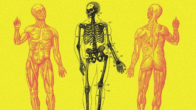 What Does a 'Natural' Human Body Look Like?