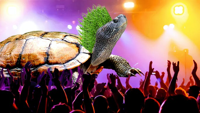 Bad News: The Punk Turtle Who Breathes Out of Its Butt Is Going Extinct