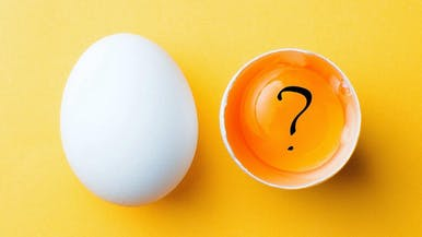 What the Heck Is an Egg, Anyway?