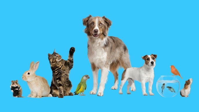Ranking Every Kind of Pet by How Capable It Is of Loving You